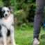 How to walk with your pets?