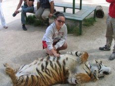 Argentina s Lujan Zoo bring a whole new meaning to petting zoo