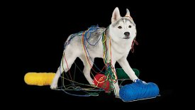 Dog Food Guide: Grain Free, Organic, Natural Dog Food | PetSmart