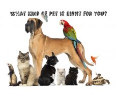 What Kind of Pet is Right for You? - Quiz - Zimbio
